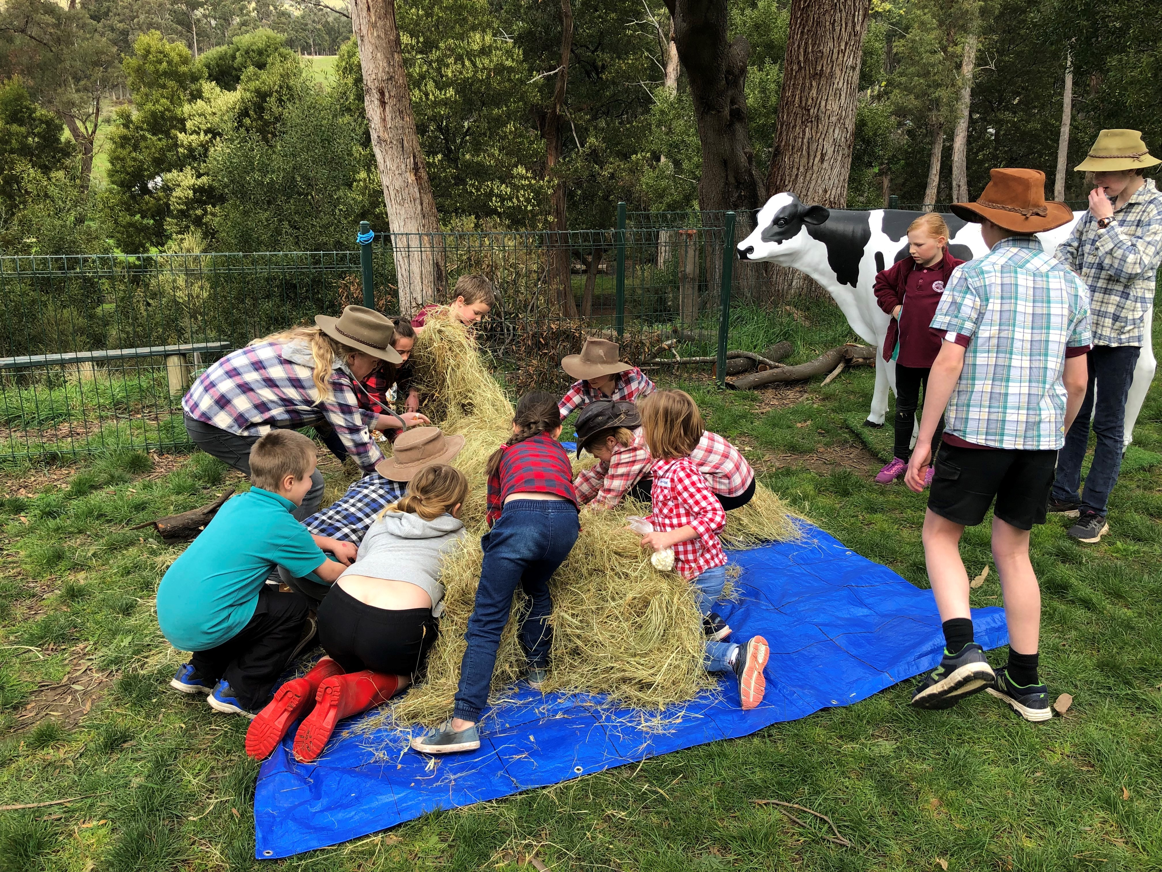 Finding animals in the haystack 3