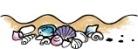 cluster of shells.jpg